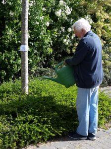 Der Vorsitzende beim Wässern seines Patenbaums.